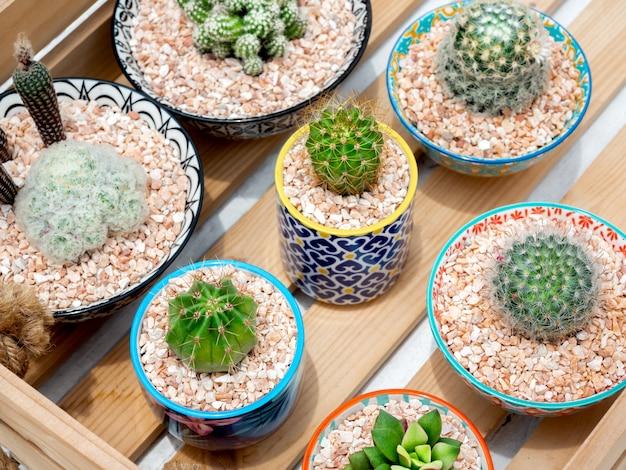 Green cactus in pot. various cactus in beautiful ceramic pots on wood box, top view. Premium Photo