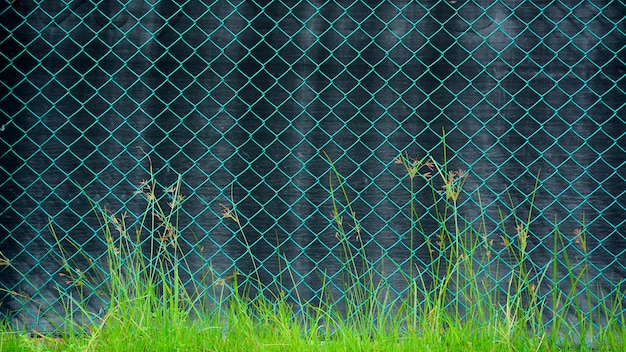Green cage metal wire front a black canvas Premium Photo