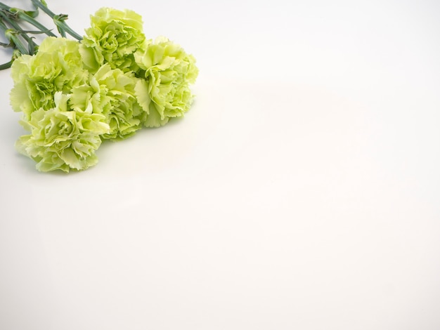 Green carnation on white background Premium Photo