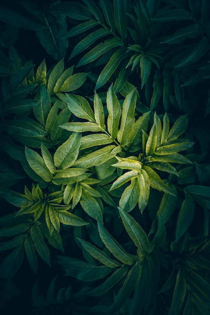 Green and colorful plant leaves textured in the garden in summer Premium Photo