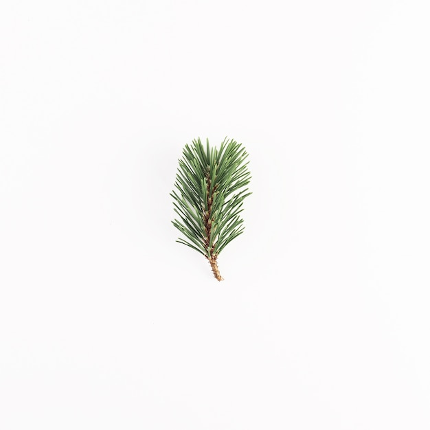Green coniferous branch on light desk Free Photo