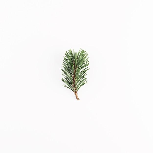 Зеленая хвойная ветка на светлом столе Бесплатные Фотографии