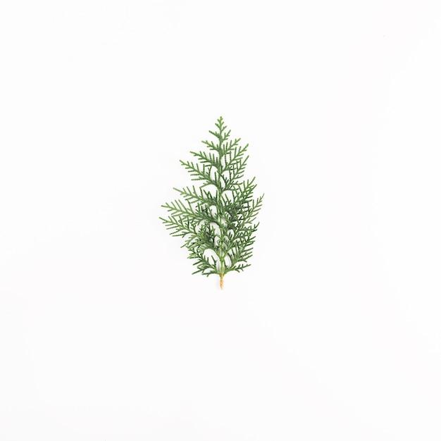 Green coniferous twig on light desk Free Photo