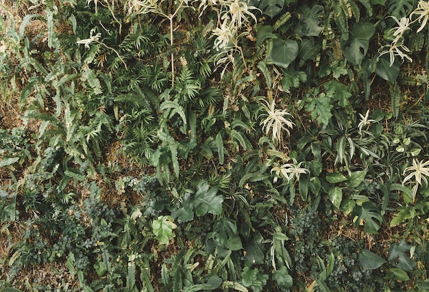Green creepers growing on wall Free Photo