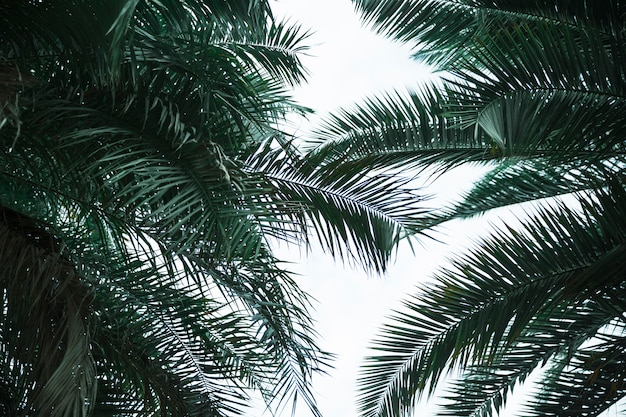 Green exotic leaves bottom view Free Photo