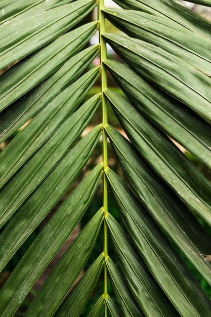Green exotic leaves close up Free Photo
