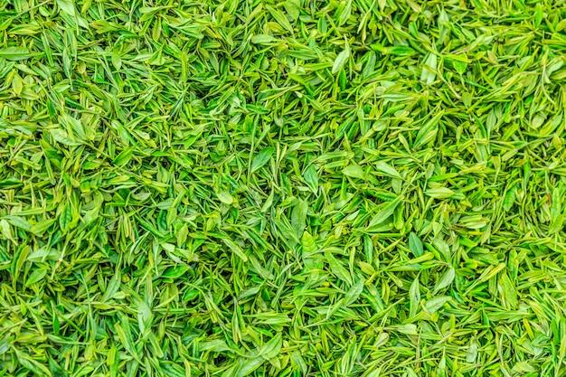 Green female fresh harvest ecology Free Photo
