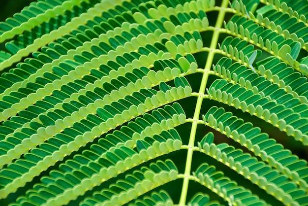 Зеленый лист папоротника крупным планом как естественный фон Premium Фотографии