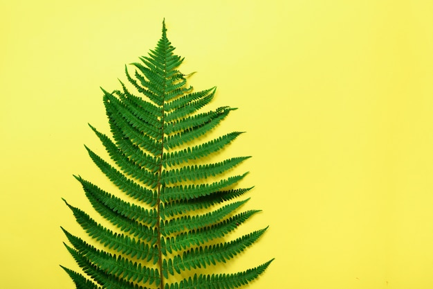 Green fern leaf on yellow background with copy space. top view. Premium Photo