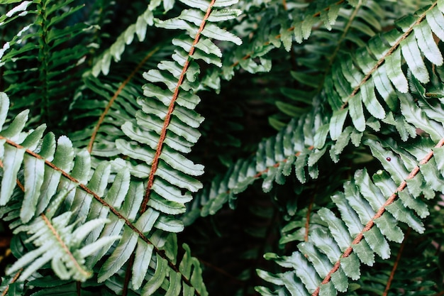 Green fern leaves forest background Free Photo