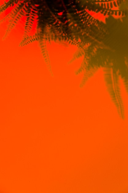 Green fern shadow on an orange background with space for writing the text Free Photo