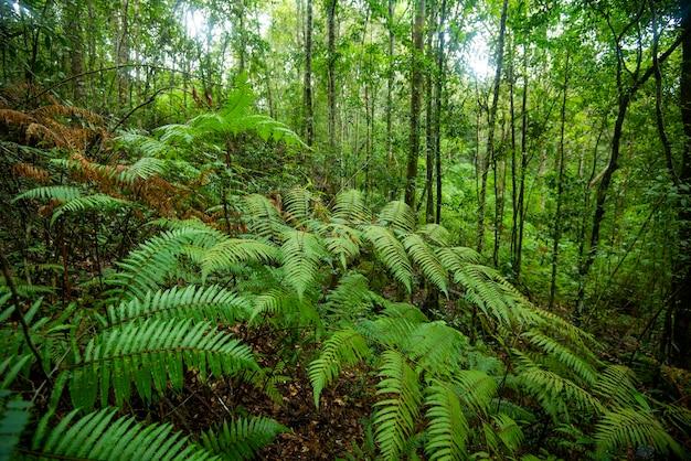 Зеленый папоротник природа в тропическом лесу / пейзаж темный тропический лес пышный Premium Фотографии