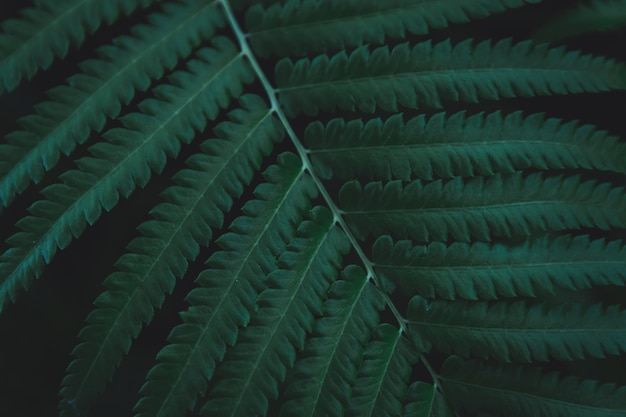 Green ferns leaves background. Premium Photo