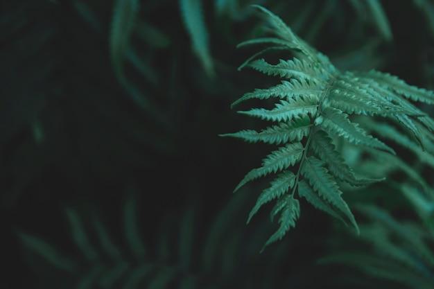 Green ferns leaves background. Premium Photo