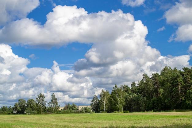 緑の野原、青い空と森 Premium写真