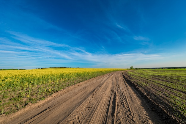 Green field, blue sky and sun. Premium Photo
