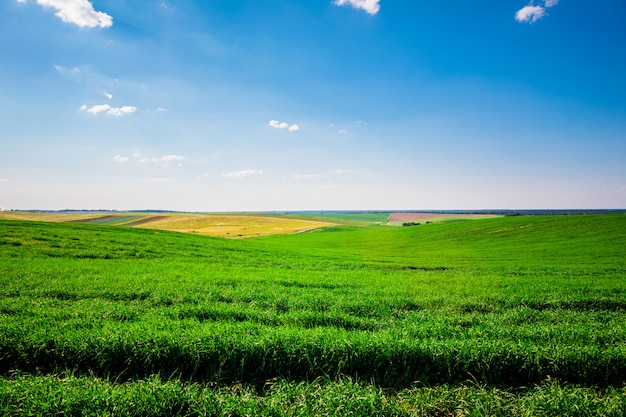 Green field,blue sky and sun. Premium Photo