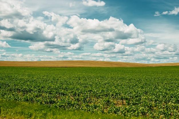 Green field, blue sky, white clouds. Premium Photo