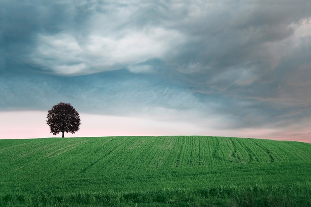 Green Field With A Tree Photo