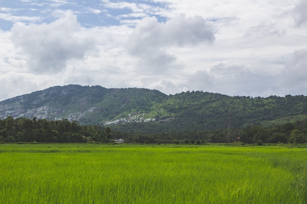 Green field with mountain in the background Free Photo