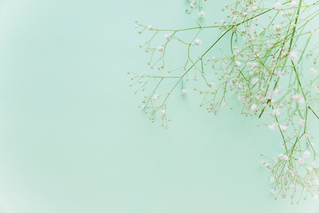 Green flowers branches on table Free Photo