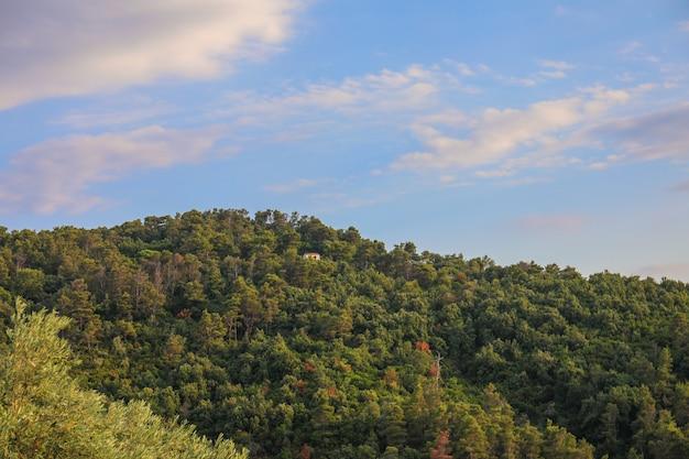 Foresta verde e il cielo blu al tramonto sull'isola di skiathos in grecia Foto Gratuite