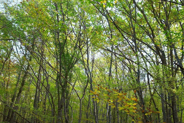 晴れた日の明るい葉の緑の森 Premium写真