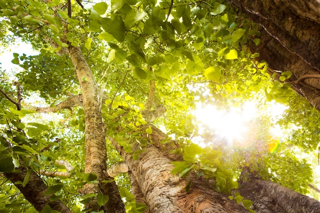Green forest with sunlight Free Photo