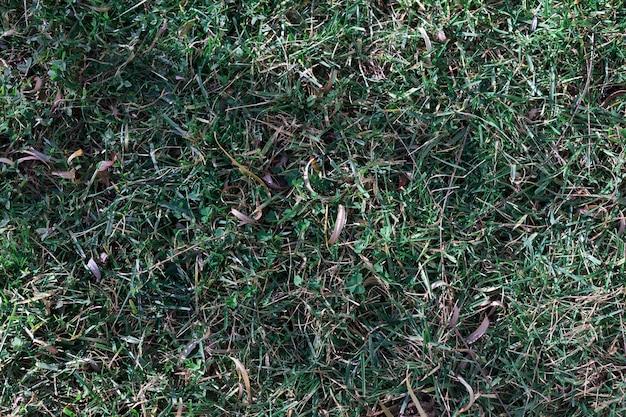 地面に緑のフラス 無料写真