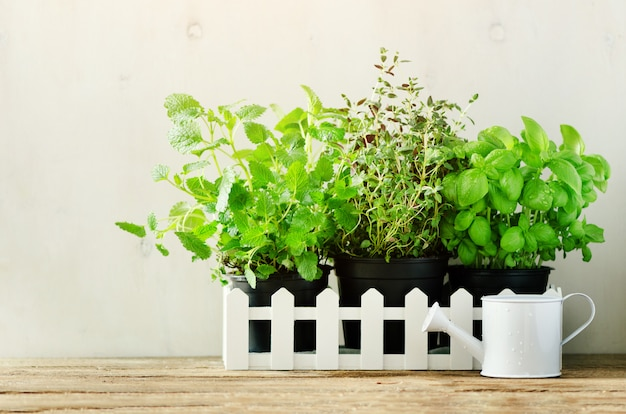 Green fresh aromatic herbs - melissa, mint, thyme, basil, parsley in pots, watering can. aromatic spices, herbs, plants frame Premium Photo