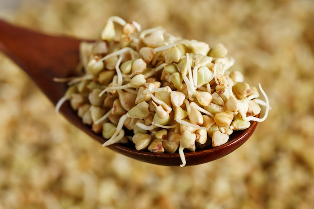 Green germinated buckwheat on a wooden brown spoon Premium Photo