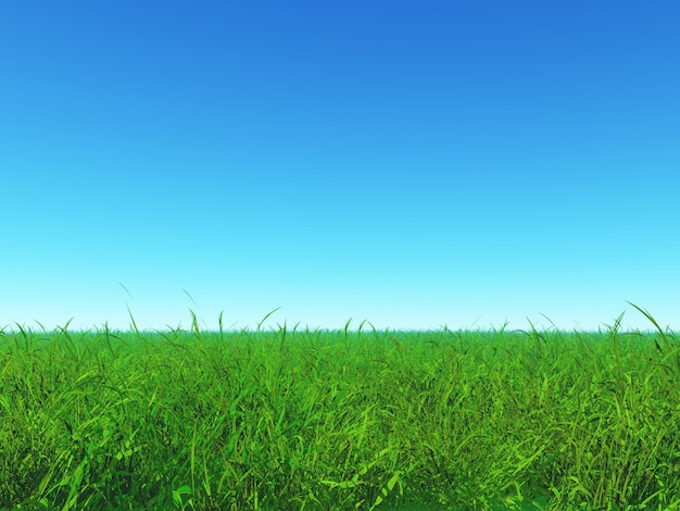 Green grass and blue sky Photo Free Download
