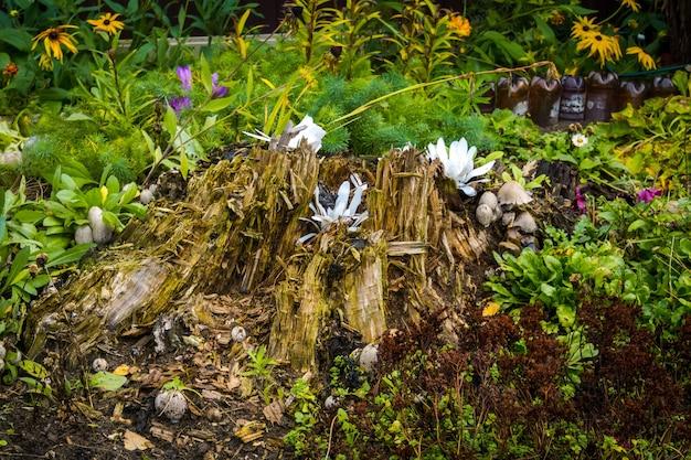 Зеленая трава и цветы в начале осеннего сезона. Premium Фотографии