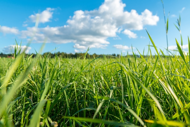 Зеленая трава и белые облака Бесплатные Фотографии