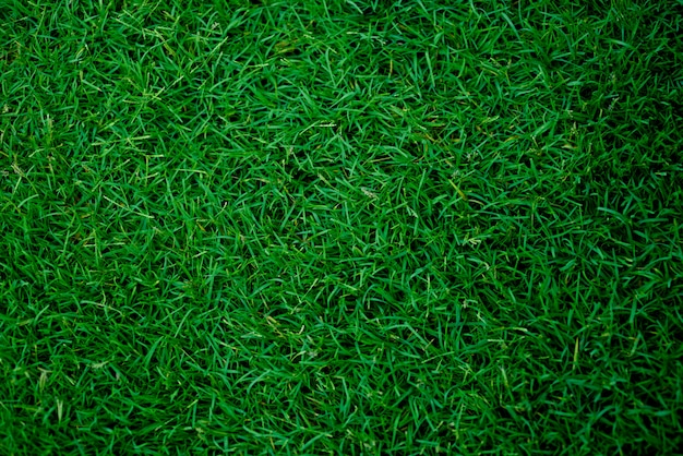 Green grass background, football field Premium Photo