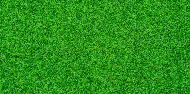 Green grass background, football field Premium Photo