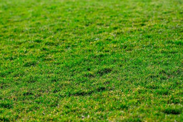 Зеленая трава фоновой текстуры. гольф или футбольное поле Premium Фотографии