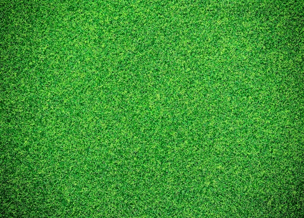 green grass background_1373 333