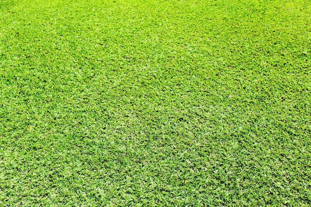 Зеленая трава фон Premium Фотографии