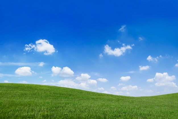 Green Grass Field And Blue Sky Photo