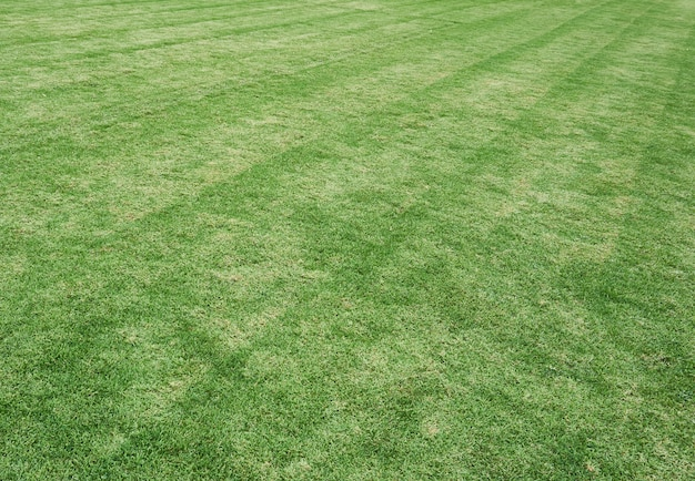 Grass Field Texture Throughout Green Grass Field Texture Premium Photo Download