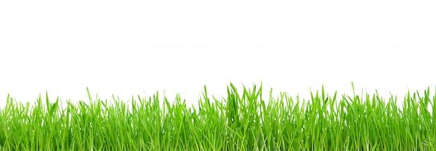 Green grass isolated on white Premium Photo