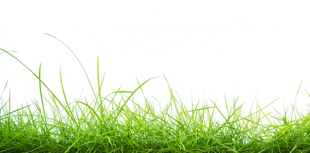 Green grass on white background Photo | Free Download