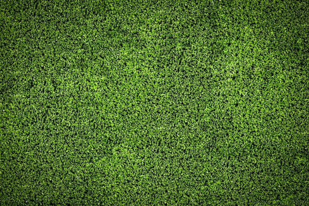 green grass soccer field. Green Grass Soccer Field For Background Texture Premium Photo Green D