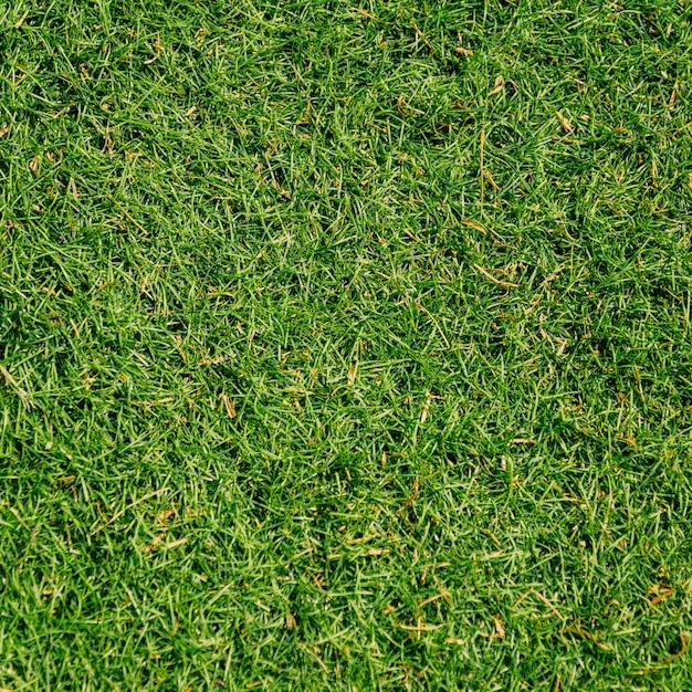 緑の草のテクスチャ背景 Premium写真