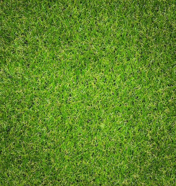 Green grass texture background. Premium Photo