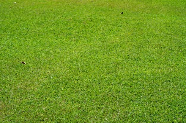 Текстура зеленой травы. Premium Фотографии