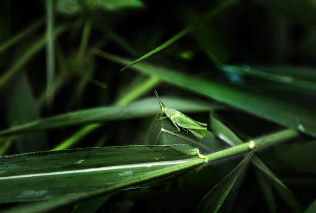 Зеленый кузнечик, стоящий на растении Premium Фотографии