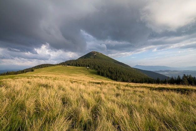 Green grassy valley on distant woody mountains. Premium Photo