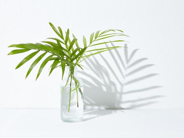 유리 항아리에 녹색 관엽 식물 무료 사진